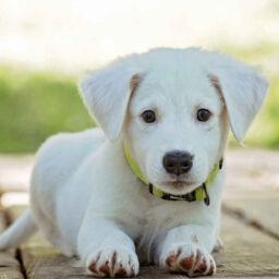mascotas propiedad horizontal